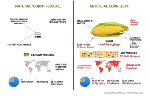 Corn  Development jpg