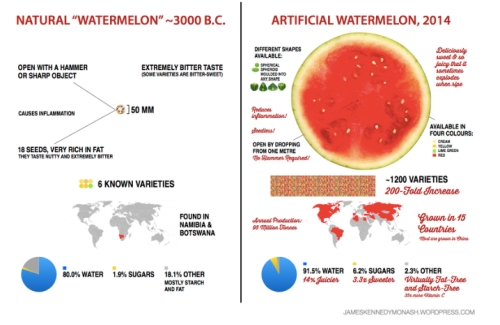 Watermelon Development  jpg